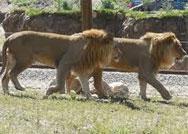 Hogle-Zoo